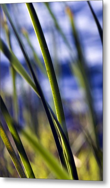 Nature Bokeh Metal Print by Karim SAARI