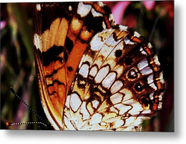 Natures Abstracts Butterfly Wings 005 Metal Print by George Bostian