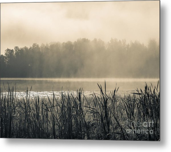 Nature's Beauties - Spiderwebs Birds And Mist Metal Print