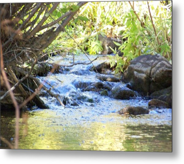Nature's Beauty Metal Print