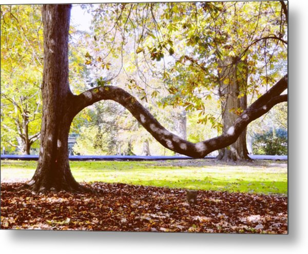 Nature's Bench Metal Print by JAMART Photography
