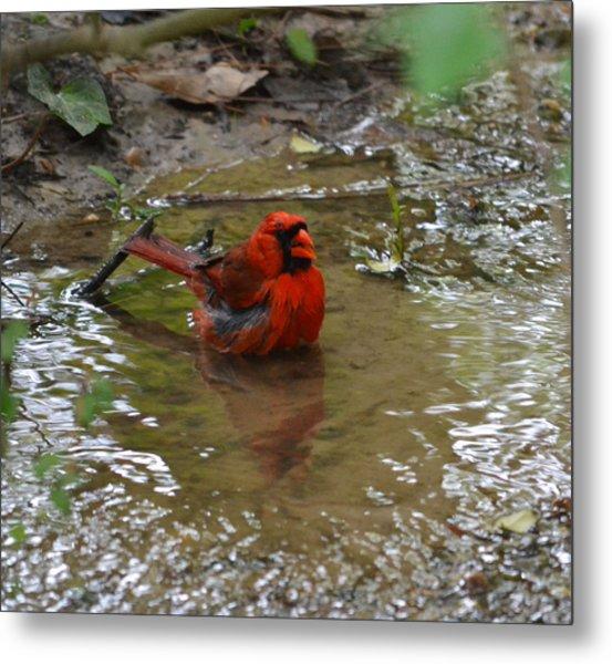 Natures Bird Bath Metal Print by Joe Bledsoe