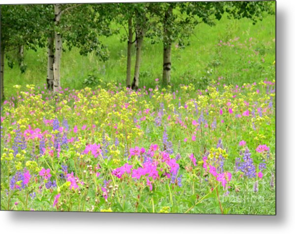 Nature's Display Metal Print by Frank Townsley