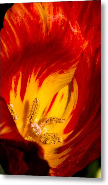 Nature's Flame Metal Print