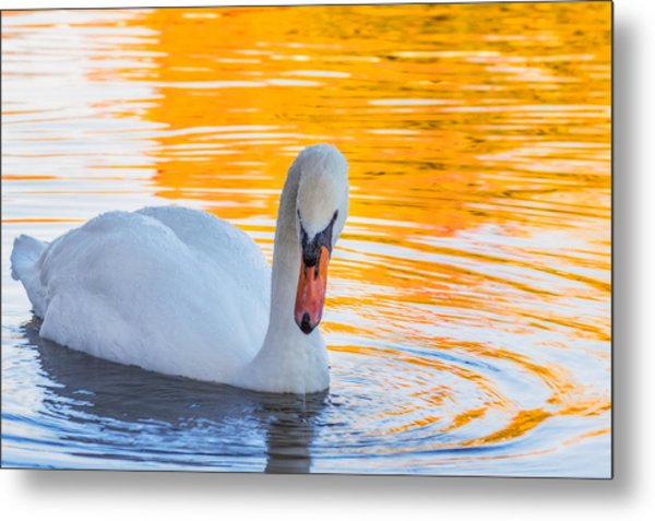 Nature's Grace Metal Print