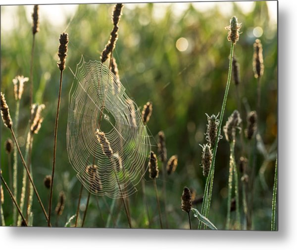 Nature's Intricacies Metal Print