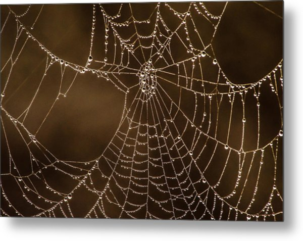 Nature's Jewels Metal Print
