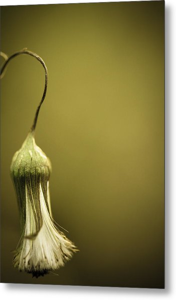 Nature's Little Lamp Metal Print