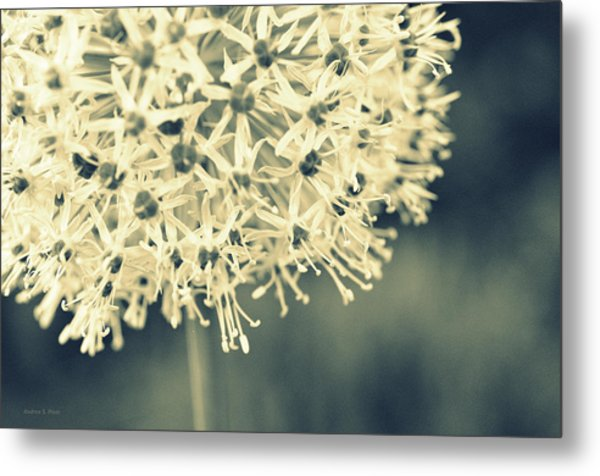 Nature's Popcorn Ball Metal Print