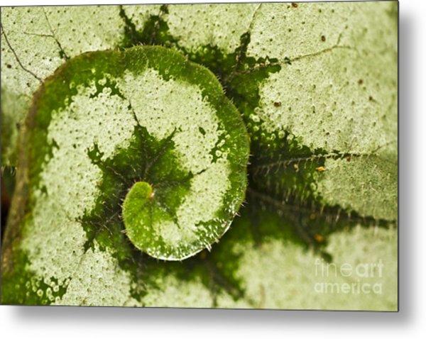 Natures Spiral Metal Print