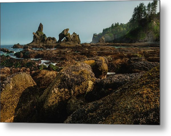 Natures Way Metal Print