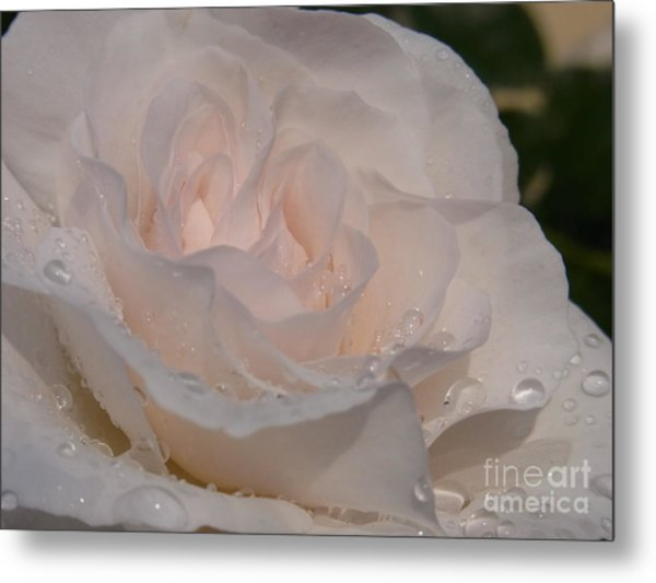 Nectar Of Innocence Metal Print