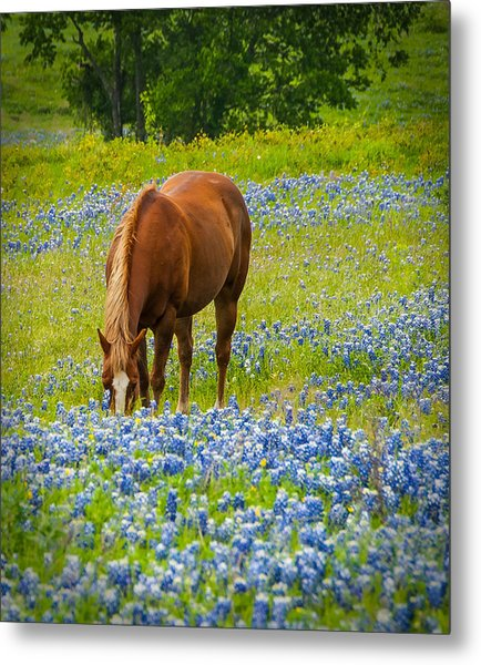 Nelly Grazing Among The Bluebonnets Metal Print
