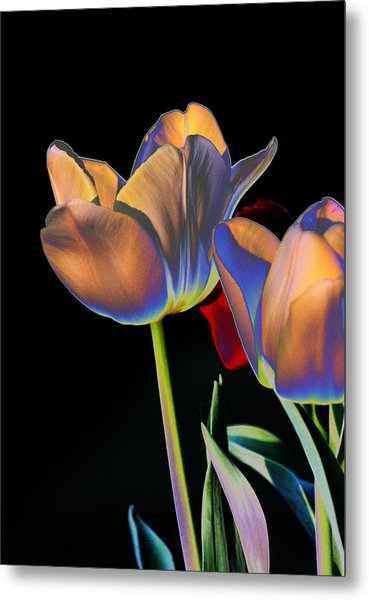 Neon Tulips Metal Print