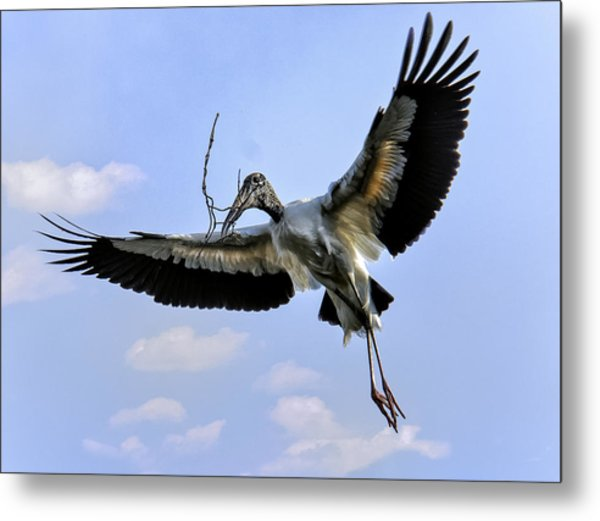 Nest Building Woodstork Metal Print