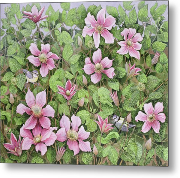 Nesting In Clematis Oil On Canvas Metal Print