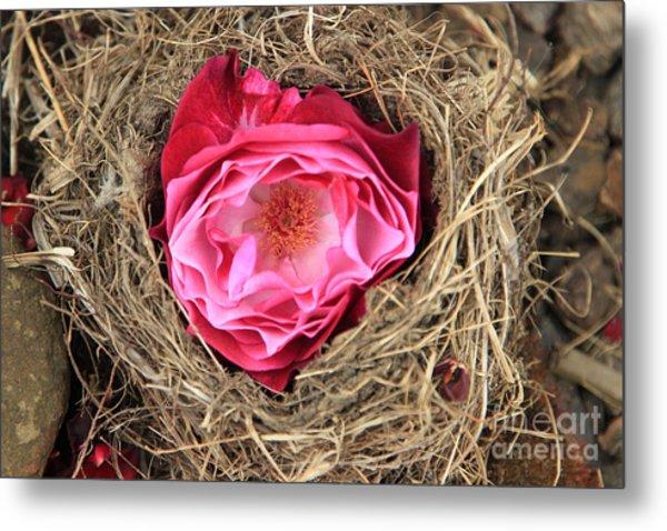Nesting Rose Metal Print