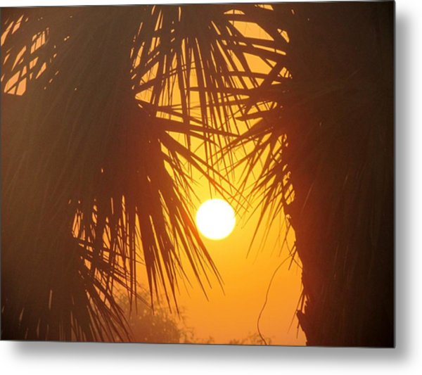 New Day In Paridise Metal Print by Will Boutin Photos