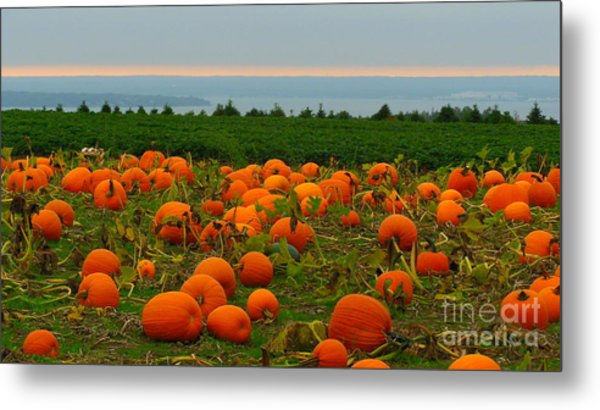 New England Pumpkin Patch Metal Print by Eclectic Captures