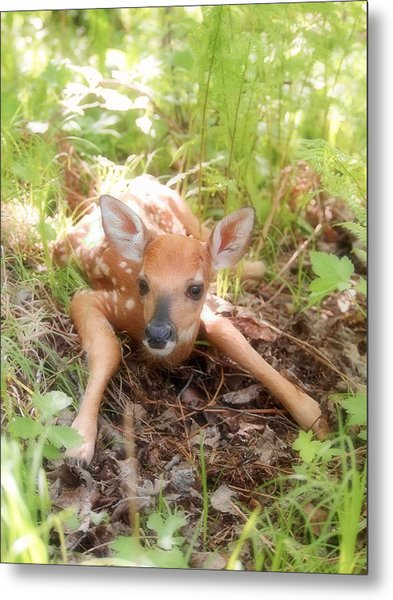 New Fawn In The Forest Metal Print