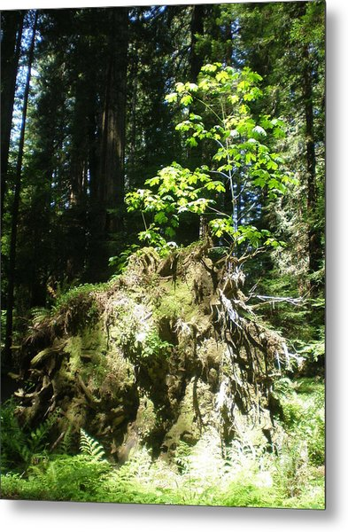 New Life For Old Stump Metal Print