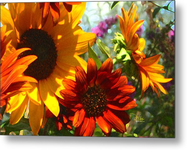 New Mexico Summer Sunflower Garden Metal Print