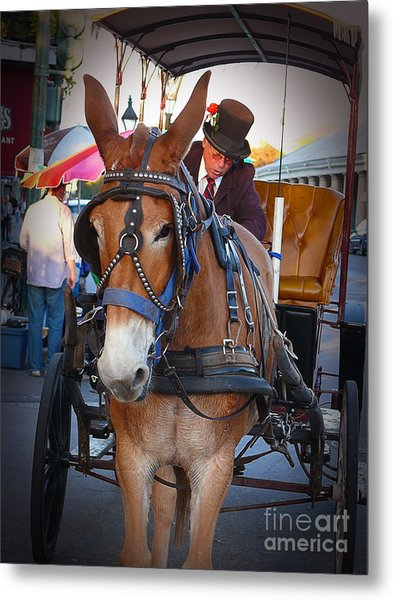 New Orleans Mule Carraige Metal Print