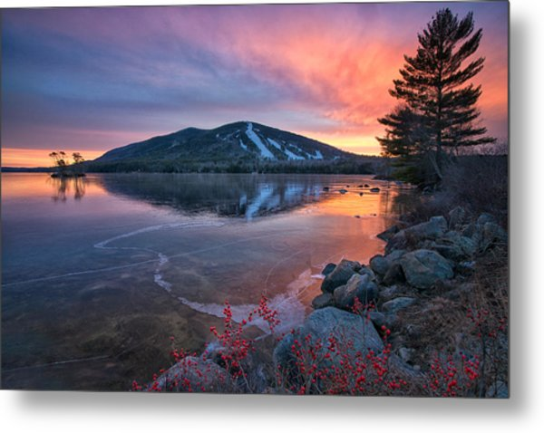 New Years Day Sunset With Berries Metal Print