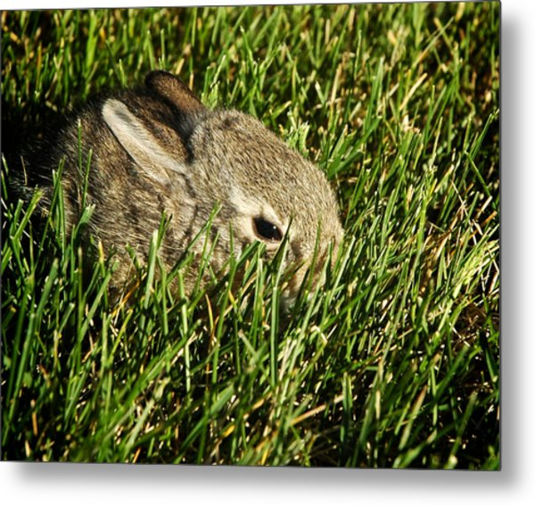 Metal Print featuring the photograph The Baby Cottontail by Mary Lee Dereske