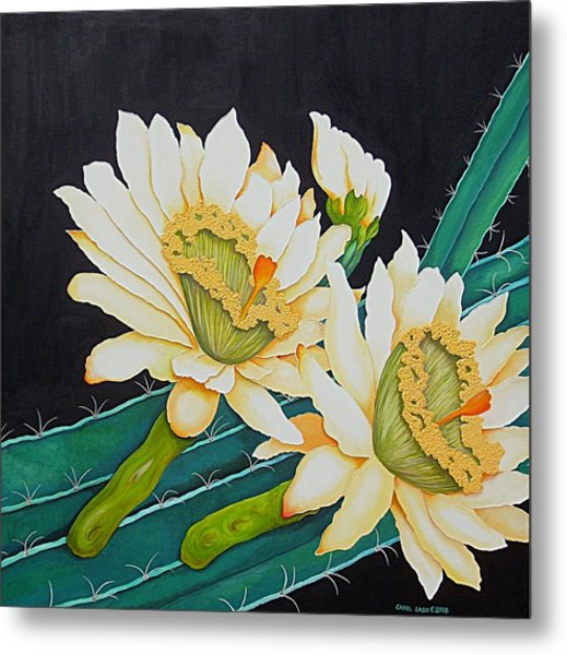 Night Blooming Cactus Metal Print by Carol Sabo