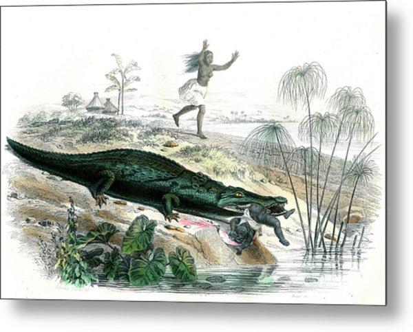 Nile Crocodile And Baby Metal Print