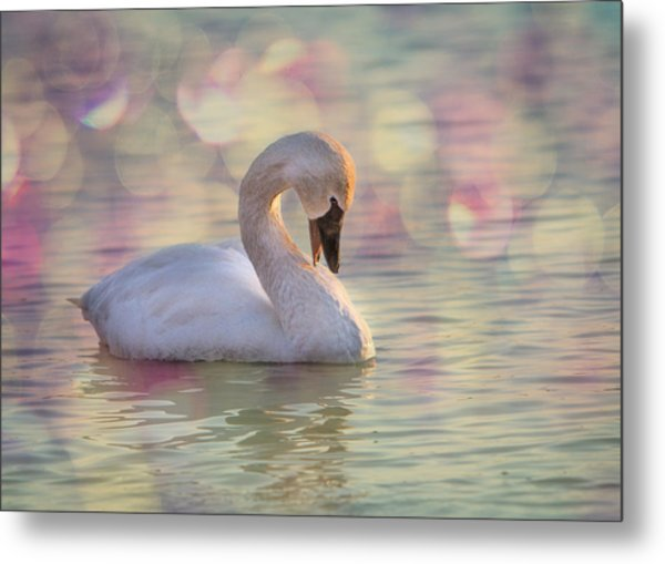 Metal Print featuring the photograph Shy Swan by Patti Deters