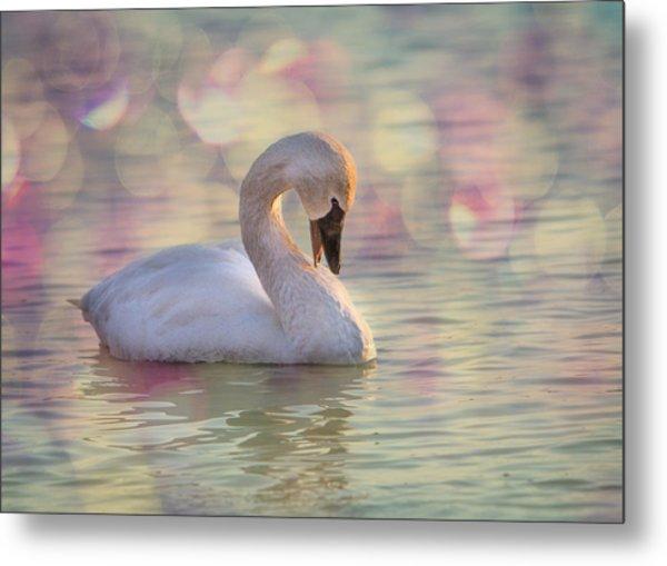 Shy Swan Metal Print