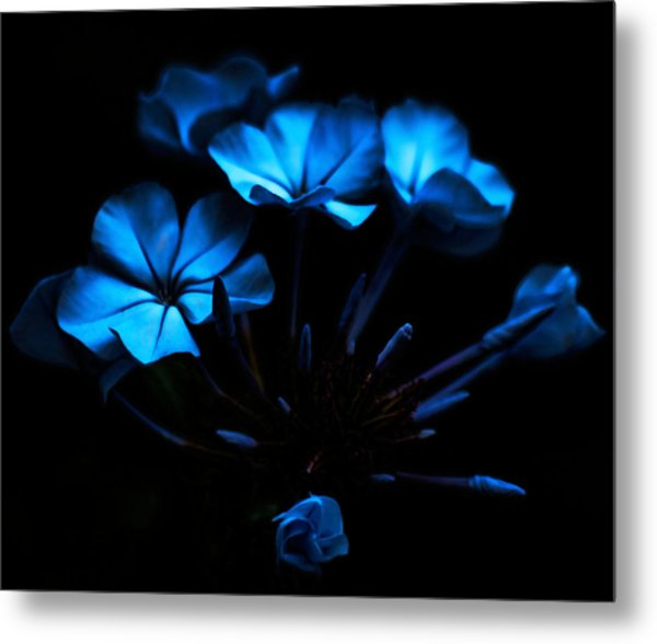 Nocturnal Blue Metal Print