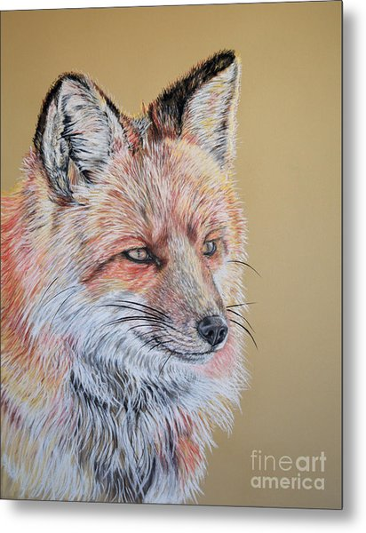 North American Red Fox Metal Print by Ann Marie Chaffin