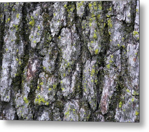 North-side Oak Bark Metal Print