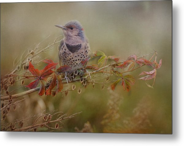 Northern Flicker In Fall Colors Metal Print