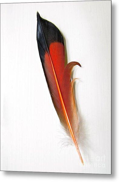 Northern Flicker Tail Feather Metal Print