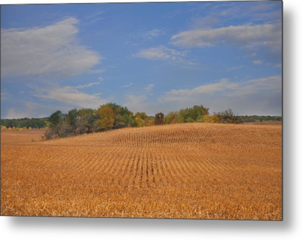 Northwest Iowa Golden Corn Field Metal Print