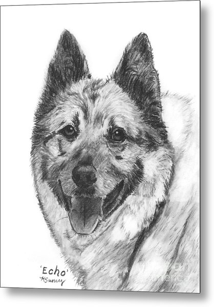 Norwegian Elkhound Sketch Metal Print