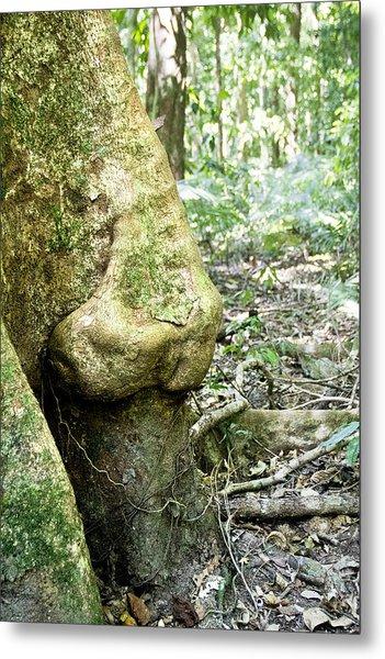 Nose Tree In Gwandanaland Metal Print by Debbie Cundy