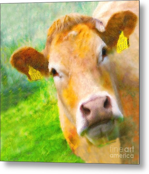 Nosey Cow Metal Print by Jo Collins