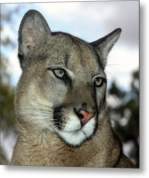 Not Amused  Metal Print
