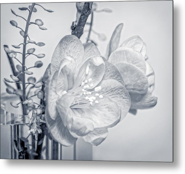 Not Quite Black And White Metal Print