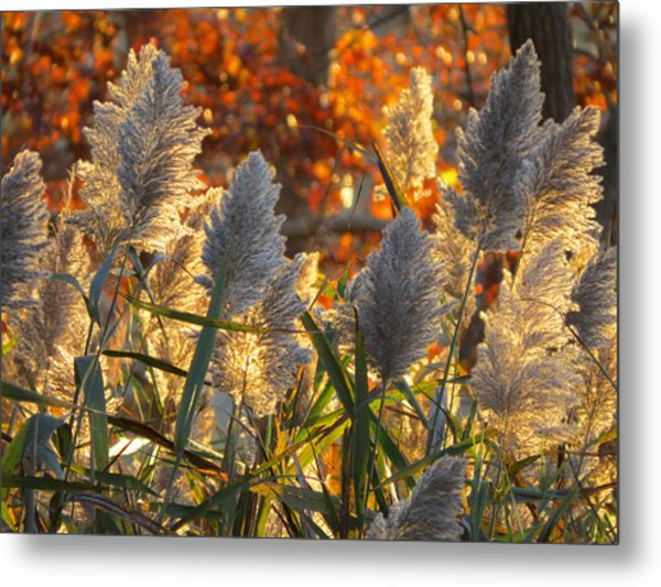 November Lights Metal Print