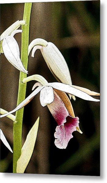 Nun's Orchid Metal Print