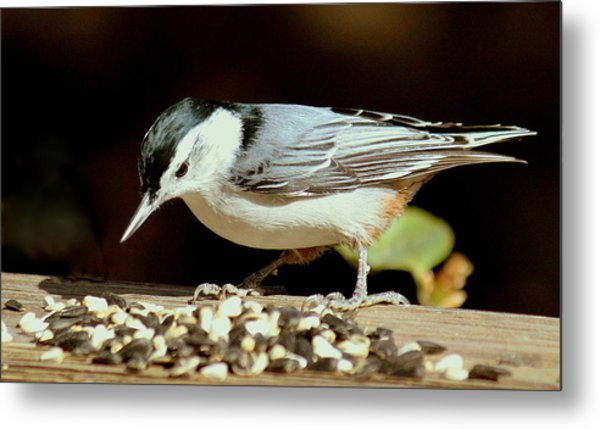 Nuts For The Nuthatch Metal Print by Rosanne Jordan
