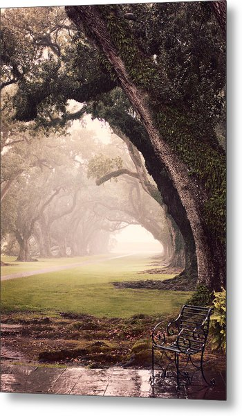 Oak Alley Metal Print
