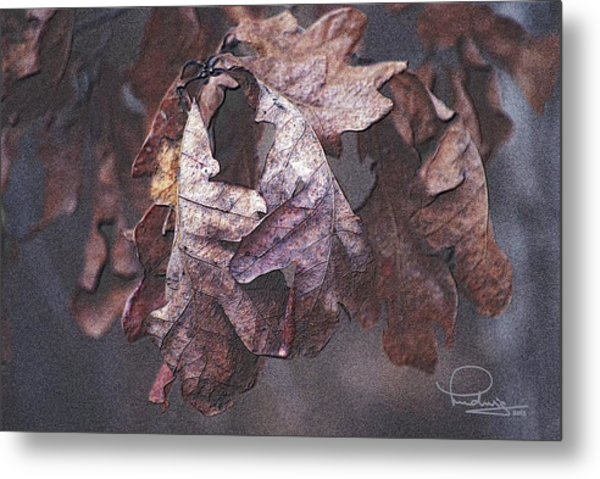 Oak Leaves Metal Print
