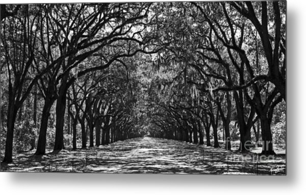 Oak Lined Lane Metal Print